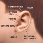 Ear Reconstructive
